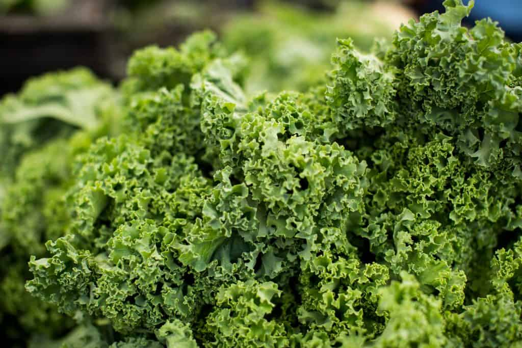 a bunch of kale